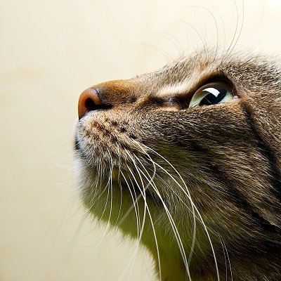 Chicago Apartments, Cat Holiday Tips
