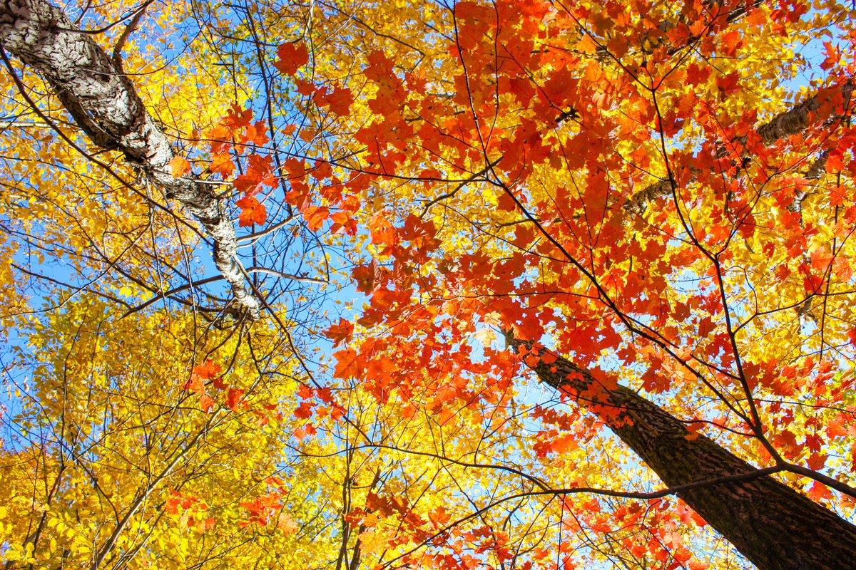 Chicago Apartments, Fall Foliage