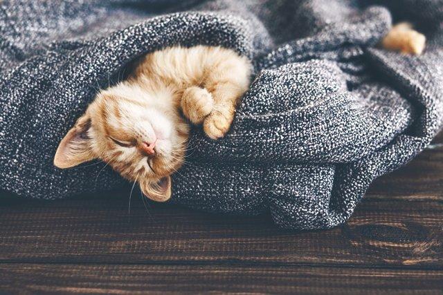 Chicago Apartments, Warm Blankets