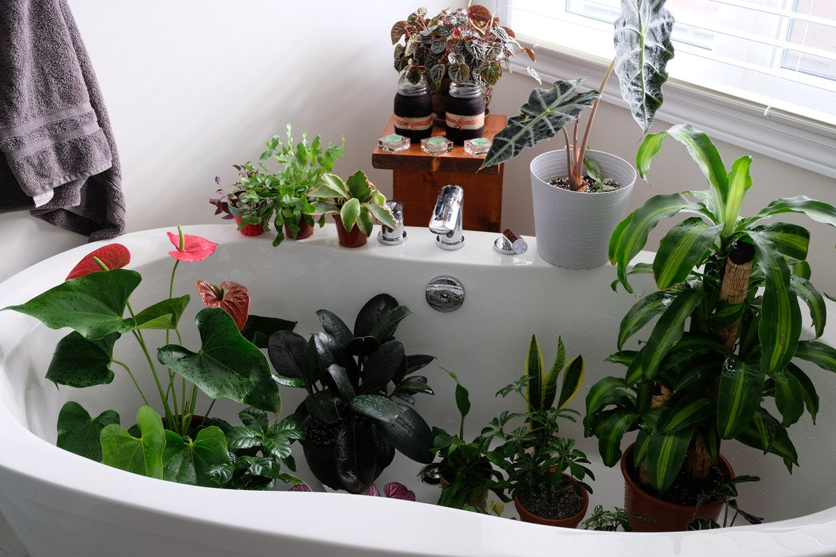 Chicago Apartments, Houseplant Cleaning