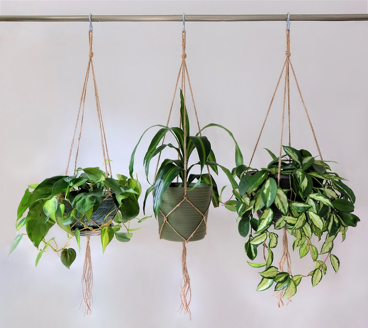 plant hanging tips, chicago apartments