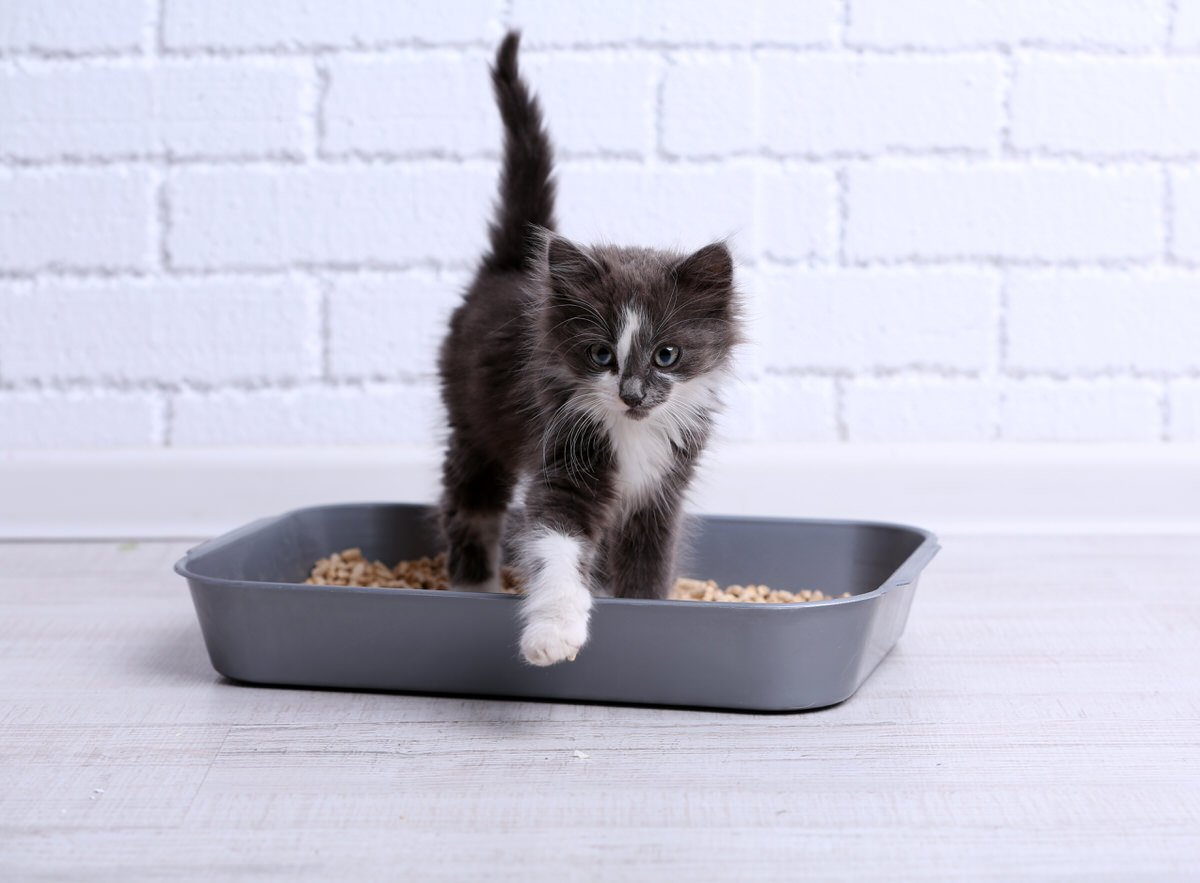Chicago Apartments, Litter Box Tips