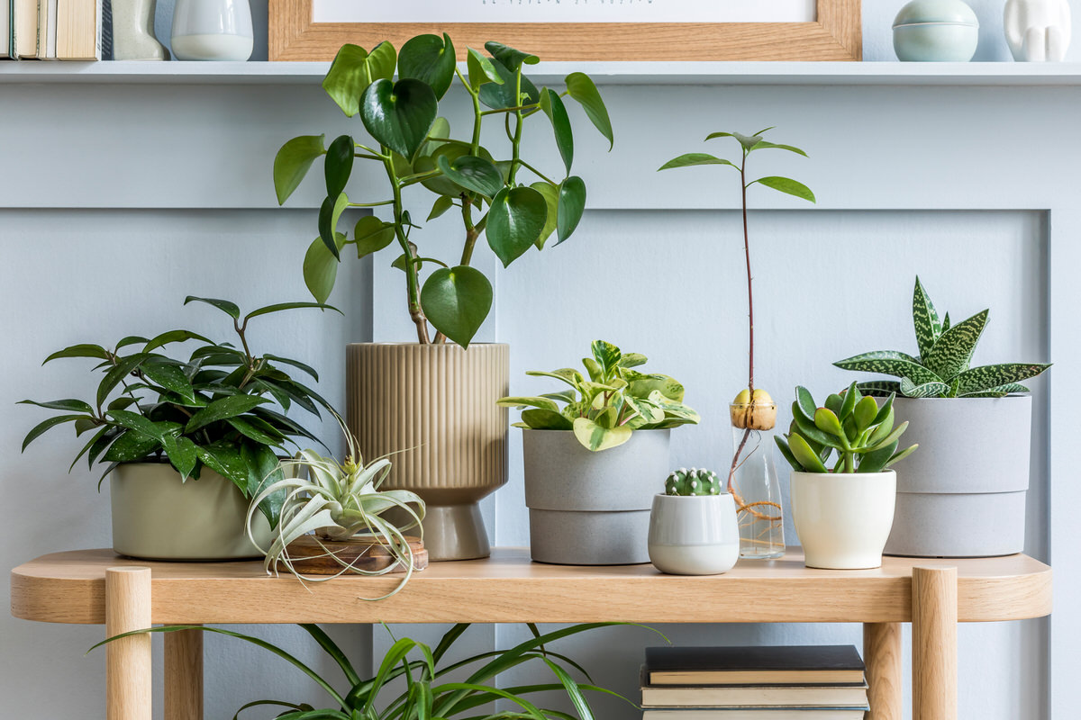 where to buy plants online