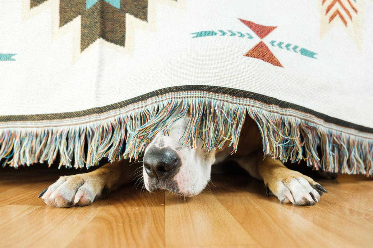 relieve dog anxiety